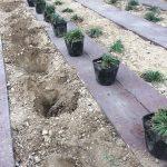 庭に苗をたくさん植えるなら、穴掘りドリルがあると結構楽!