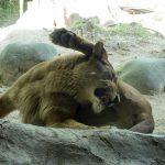 混雑する時期に、愛媛県立とべ動物園へ行くときのポインツ